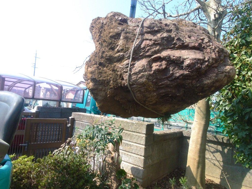 ようやく玉掛けして庭石を吊り上げる