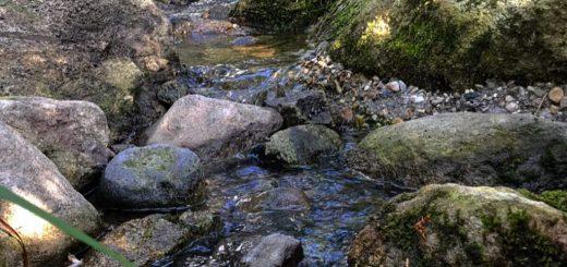 雑木の庭の流れの石組